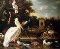 Verschiedene Vogelarten an einem Teich in einem Park