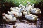 Ans Ufer (Enten)