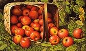 Ein Korb mit Äpfeln
