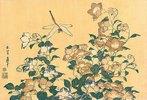 Chinesische Glockenblume und Libelle. Aus 'Die große Blumenserie'