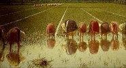 Für achtzig Cents (Arbeit im Reisfeld)