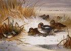 Mallard-Enten und Schnepfen im Winter