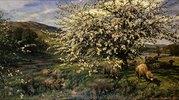 Obstgarten mit Schafen im Frühling (in Wales)