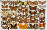 Schmetterlinge. Porzellanmalerei