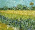 Feld mit Schwertlilien in der Nähe von Arles. Mai