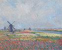 Tulpenfelder in der Nähe von Den Haag