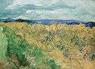 Weizenfeld mit Kornblumen