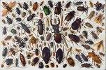 Verschiedene Käfer