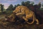 Eine Löwin schlägt ein Wildschwein