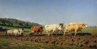 Pflügen mit Ochsen im Nivernais