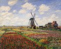 Tulpenfelder vor der Rijnsburger Windmühle