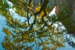 Baum spiegelt sich im Wasser, Wassergraben Schloss Mellenthin