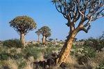 Namibia; Köcherbaumwald nähe Keetmanshoop