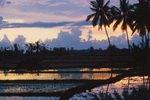 Indonesien; Reisfeld auf Bali
