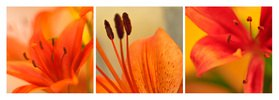 Florale Form: Lilien
