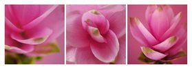 Florale Form : CURCUMA