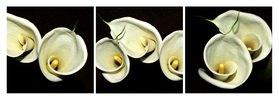 Florale Formen: Calla