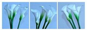 Florale Form: CALLA, kühl