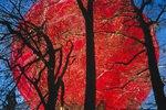 Roter Ballon hinter Bäumen