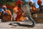 Schlangenbeschwörer Pakistan
