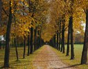 Avenue in the court garden, Schleissheim, Munich,  Bavaria, Germany