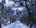 Linden (Tilia), Lindenallee im Winter