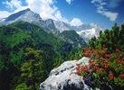 Alpenrosen am Kreuzeck gegen Alpspitze und Zugspitze