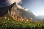 Trollblumen vor der Dreizinkenspitze, Karwendelgebirge, Tirol, ÷sterreich