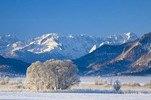 Murnauer Moos bei Murnau mit Wettersteingebirge, Oberbayern