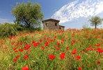 Mohnfeld vor einem Landhaus an den Hängen über Orvieto, Provinz Terni, Umbrien, Italien