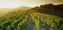 Oltrep Pavese, vineyards near Casteggio town, Lombardei, Italien