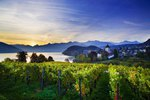 Spiez, medieval castle and vineyards, Thunersee, Berner Oberland, Alpen, Bern, Schweiz