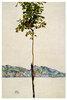 Bäumchen (Kastanienbaum am Bodensee)