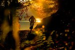 Bayern, Walchensee, Mountain Bike, Herbst