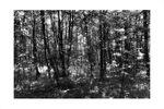 """Aus dem Buch """"Ein Garten der Natur"""", eine Hommage an den Gartenarchitekten Friedrich von Sckell. Fotografiert im Nymphenburger Schlosspark in München"""