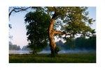 Aus dem Buch Ein Garten der Natur, über den Nymphenburger Schlosspark in München