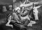 Aegypten: Schlafender Eseltreiber in Kairo