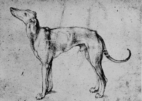 Albrecht Dürer: Windhund, um 1500