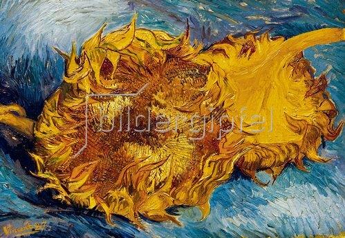 Zwei Abgeschnittene Sonnenblumen Von Vincent Van Gogh Kunstdruck