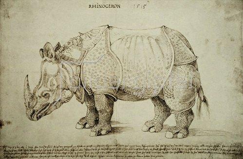 Albrecht Dürer: Rhinozeros, 1515