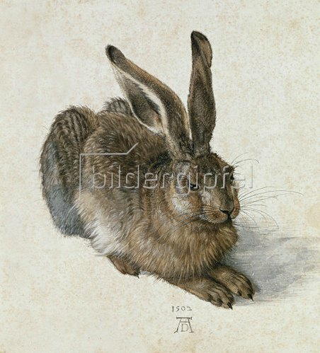 Albrecht Dürer: Young hare, 1502