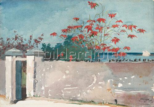 Winslow Homer: A Wall, Nassau, 1898