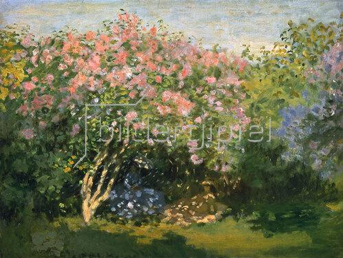 Claude Monet: Blühender Flieder in der Sonne. 1873.