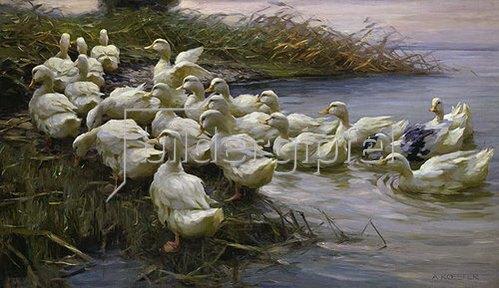 Alexander Koester: Enten am See-Ufer