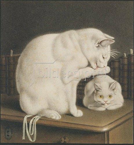Gottfried Mind: Zwei weisse Katzen auf einem Tisch mit Büchern.