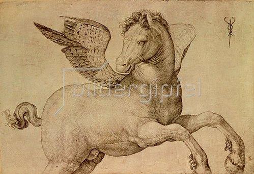 Jacopo de Barbari: Pegasus.