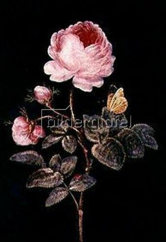 Barbara Regina Dietzsch: Die hundertblättrige Rose.