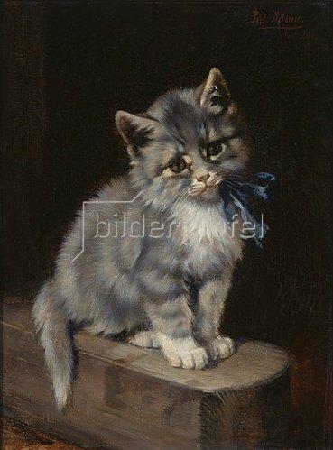 Julius Adam: Kätzchen mit blauer Halsschleife.