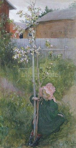 Carl Larsson: Apfelblüte (Appelblom). 1894.