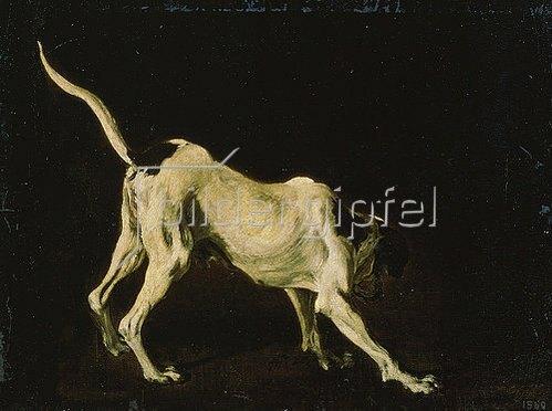 Frans Snyders: Ein weiss-schwarzer Hund.